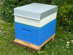 Rentahive Blue brood box also showing a cream honey box