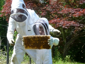 A Ripe time of year for bee colonies