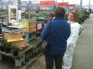 Rentahive Visits Mitre 10 Mega In Dunedin to demonstrate a live beehive