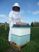Heidi tending to one of our hives