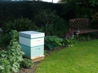 Rentahive hive displaying Pale Turquoise and Cream colours